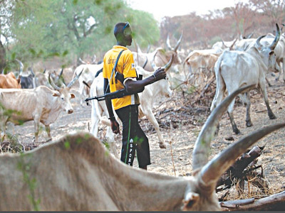 Why Herdsmen/Farmers Clash In Nigeria --- Expert